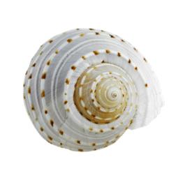 CVL SLP Shell