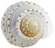 cvl slp shell 2